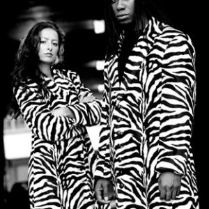 mlr_zebra